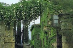 Image from https://trouver.files.wordpress.com/2009/08/villa-cuzzano-edith-whartons-italian-gardens.jpg.