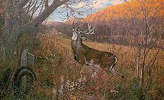 """October Ritual - Whitetail Deer"" is another beautiful fall setting whitetailed deer print. Wildlife Paintings, Wildlife Art, Deer Paintings, Hunting Art, Deer Hunting, Hunting Stuff, Whitetail Deer Pictures, Deer Pics, Deer Art"