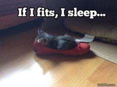 If I Fits