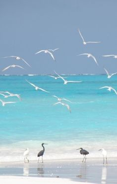 Seagulls and Egrets ~ love the color of the water!