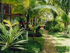 Love - I want a yard that feels like a tropical island...