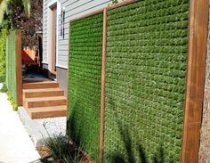 This wall of grass is a great way to inexpensively save energy in the summer. It cuts down on heating the southern walls of your home. And provides privacy. We'd recommend that it be plants that are food, however using various grasses also makes sense.