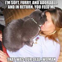 Deal between cat and human