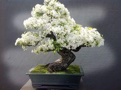 Los 26 bonsáis más bonitos que hemos visto en mucho tiempo - Taringa!