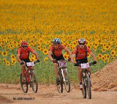 Cycling through a field of sunflowers in the Alentejo. Alentejo #Portugal #Hotel #travel by luis Calado