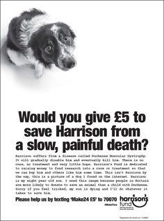Di Lürzer Archivio - Stampa annuncio della settimana: Fondo di Harrison
