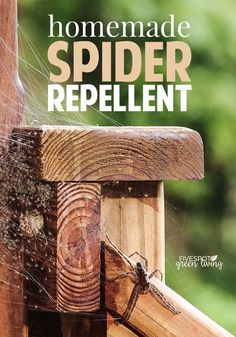 Use natural Peppermint Essential Oil to deter spiders, mice and other insects inside the home! Peppermint oil for spiders works so well. Spider Repellent Essential Oils, Essential Oil For Spiders, Essential Oil Spray, Peppermint Oil For Spiders, Peppermint Spray, Peppermint Oil Uses, Spider Spray, Get Rid Of Spiders, Household Pests