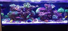 Marine Tank, Saltwater Aquarium, Aquariums, Tanks, Animals And Pets, Saltwater Tank, Tanked Aquariums, Fish Tanks, Fish Tank