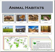 Animal Habitats Cards
