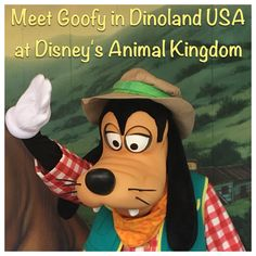 Get photos and autographs with Goofy in Dinoland USA at Disney's Animal Kingdom park at Disney World.