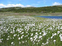 Image result for tumbler ridge wildflowers