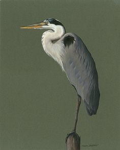 Heather A. Mitchell   COLORED PENCIL Great Blue Heron on Green