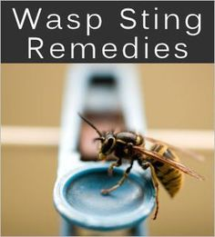 Treatments & Home Remedies For Stings & Bites~ Apply apple any or all of the following and cover with ice~ lemon juice, cider vinegar, olive oil, baking soda, salt and place ice on it. Then crush together any or all of the following to apply like a poultice~ activated charcoal, garlic, onion, cucumber, raw potato. Place a bandaid over it and let heal.
