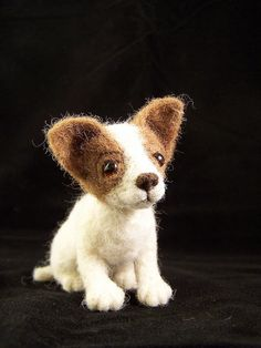 Puppy with glass eyes
