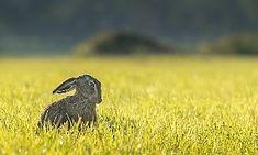 Osterhasen-Quiz: 15 Rätselfragen für Kinder und Erwachsene Quiz, Bird, Animals, Small Flowers, Easter Bunny, Kids, Easter, Play Ideas, Animales