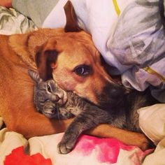 When these two crossed species barriers. | 27 Times Dogs Were Truly The Best Kind Of Friends