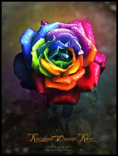 The Rainbow Rose. Wish this was a real rose, would be so cool if it was Colorful Candy, Candy Colors, Rainbow Flowers, Rainbow Colors, Beautiful Roses, Beautiful Flowers, Simply Beautiful, Autumn Rose, Love Rose