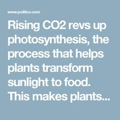 Rising CO2 revs up photosynthesis, the process that helps plants transform sunlight to food. This makes plants grow, but it also leads them to pack in more carbohydrates like glucose at the expense of other nutrients that we depend on, like protein, iron and zinc.