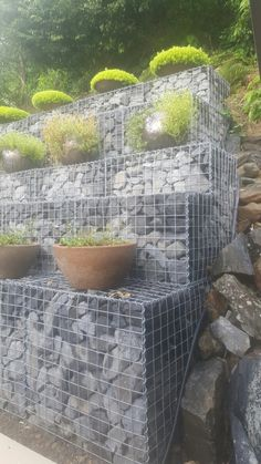 gabion wall with potplants
