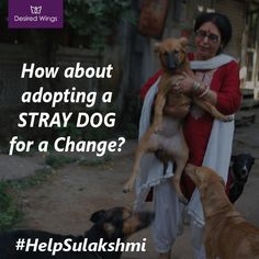 Touched by such a scenario for dogs this lady, Sulakshmi Dasgupta, 15 years back had a beautiful story to share that inspired us tremendously. She was owning 3 dogs at that time, while feeding and taking care of them, she somehow developed a strong instinct for dogs living in the vicinity and so her family of 3 dogs grew to initially 6 dogs, which has now reached a count of 450+ dogs. People have usually witnessed her in South Delhi, Okhla region often feeding and loving dogs.