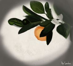 sólo pepistika Plants, Illustrations, Plant, Planting, Planets