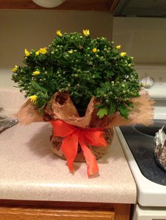 Bought three mums at Sam's today, wrapped in burlap, and tied a ribbon.  All for under $7.00!