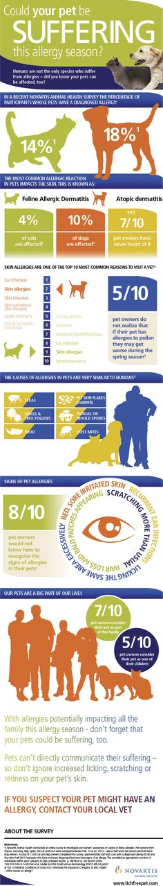 Could your pet be suffering this allergy season? [Infographic] #pets #animals #cats #dogs #health #education #animalwelfare