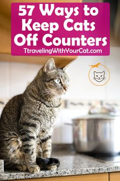 57 Ways to Keep Cats Off Counters How to Keep Cats Off Counters? It can be quite frustrating to discover at least one cat hair in every meal prepared and to see those cute little paws that just Cat Care Tips, Dog Care, Pet Tips, Care Care, Keeping Cats Off Counters, Keep Cats Away, Pet Barrier, Pumpkin Dog Treats, Kitten Care