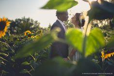 Mariés dans un champ de tournesol - Sud - Midi #idéephotomariage #photodecouple #photodecouplemariage #frenchwedding #mariageparis #weddinginparis #reportagedemariage #beautifulbride #photodemariage #wedding #love #emotions #amour #baiser #sublimemariée