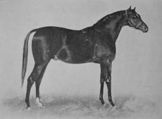 Speculum(1865)(Colt)Vedette- Doralice By Orlando. 4x5 To Blacklock, 5x5 To Whalebone. Won Goodwood Cup. After Retiring From Racing He Was Not A Very Fashionable Sire, But He Did Manage To Produce One Line That Was Sent To U.S. And Became An Important Line That Produced At Least 8 Ky Derby Winners.