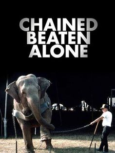 The only way to stop the abuse is to STOP BUYING TICKETS! Say NO to captivity for entertainment. We Have to Give Them their own Future! #ivoryforelephants #stoppoaching #elephants for #ivory ! #animals