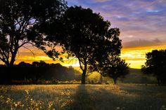 Morning glory by noel.edling