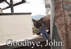 This will break your heart and make you die of laughter pretty much simultaneously. Click for gif