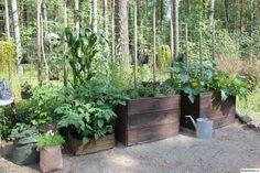 piha,laatikko,kasvilaatikko,kasvit,pihakasvit,istutus