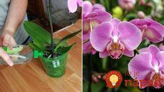 Levný zázrak pro orchideu - jen pár zálivek a své květiny nepoznáte: Toto je spása i pro polomrtvé rostliny! Forks, Gardening, Plant, Florals, Lawn And Garden, Bobby Pins, Folk, Urban Homesteading, Horticulture