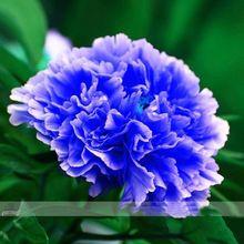 Doble luz azul peonía árbol semillas, Noble ' Rare Peony del árbol planta, 1 semillas / paquete(China (Mainland))