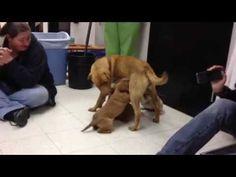 momma dog reunites with babies - YouTube