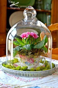 green moss and pink primroses in a flowery teacup bell jar wedding centerpiece / http://www.himisspuff.com/glass-cloche-bell-jar-wedding-ideas/6/