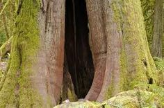 Mystery hole in a magic old tree