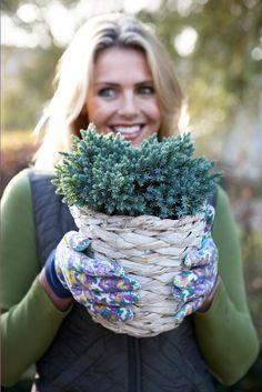 #nadelbäume #pflanzenfreude #pflanzen #plants #conifer #garten #garden #winter