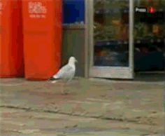 A seagull committing a crime:   21 Things You've Never Seen Before In Your Life