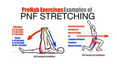 PreHab Exercises - Effective Stretching Techniques - Examples of PNF Stretching