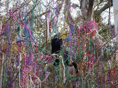 mardi gras bead tree | ... saw this panther in a tree of beads on mardi gras day a few years ago