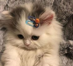 Uploaded by aphrodite. Find images and videos about cute, cat and animal on We Heart It - the app to get lost in what you love. Cute Baby Cats, Cute Little Animals, Cute Cats And Kittens, Cute Funny Animals, Kittens Cutest, Funny Cats, Cute Dogs, Cats Humor, Funny Horses