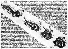 """Escher """"Pedalternorotandomovens centroculatus articulosus"""""""