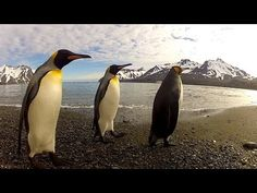 You Know You Want To See This Penguin Dance-Off! HYSTERICAL! | PetFlow Blog - The most interesting news for pet parents around the world.