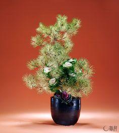 豪華なじゃのめ松は、新年を華やかな気持ちで迎えさせてくれます。紫と白の独特な色合いの葉ぼたんで、さらに晴れやかさを演出しました。花材:じゃのめ松、葉ぼたん 花器:陶器花器 The dragon eye pine enables us to welcome the New Year with festive feeling. The decorative kale with its distinctive hues of purple and white adds radiance. Materials: Pine, Decorative kale Container:Ceramic vase  #ikebana #sogetsu