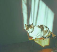 Miss Almendra aprovechando el sol. . . . . #cat #catlover #instaconce #instachile #instagood #photooftheday