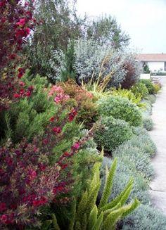 ✔ 56 fabulous xeriscape front yard design ideas and pictures 32 Xeriscape Front Yard, Rogers Gardens, Yard Design, Garden Landscape Design, Xeriscape, Garden Shrubs, Australian Native Garden, Garden Planning, Drought Tolerant Garden