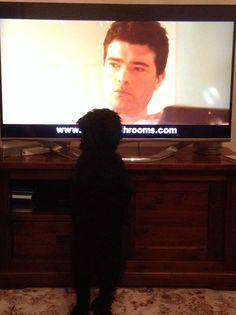 Pippa watching TV!